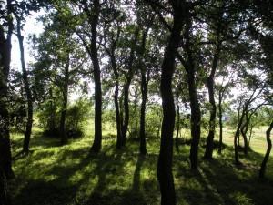 Bosque-de-zabalgana en Vitoria